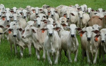 Confagan: Autoridades solo actúan cuando los robos de ganado son escandalosos