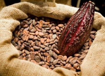 Venezuela intenta volver a la Organización Internacional del Cacao