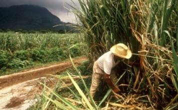 Trabajadores agroalimentarios se declaran en desobediencia