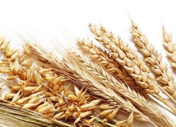 FAO pronostica caída en producción de cereales en Venezuela este año