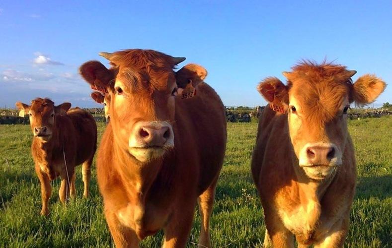 Un kilo de carne cuesta 50 % del salario desde ayer — Sundde