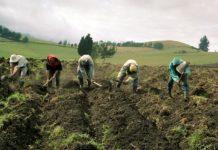 Agricultor señala que las importaciones exoneradas de impuestos perjudican la producción nacional