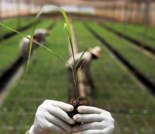 Digitalizar el agro en América Latina, clave para progreso y seguridad alimentaria