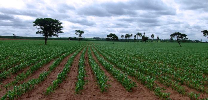 agricultura en Venezuela
