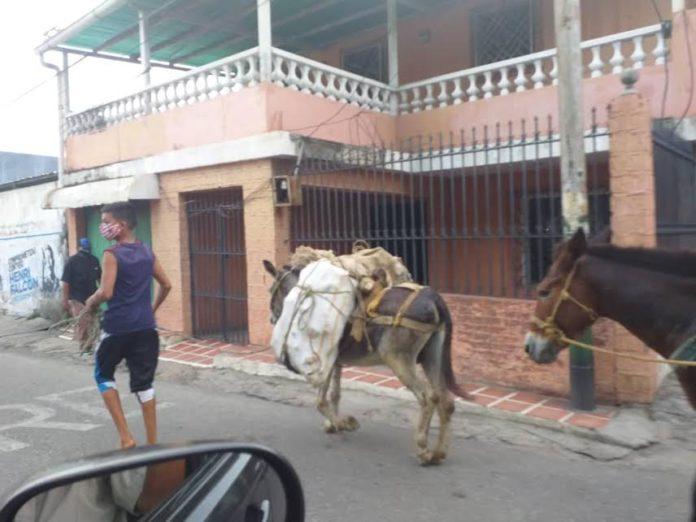 Campesinos trasladan alimentos en multas porque no consiguen gasolina