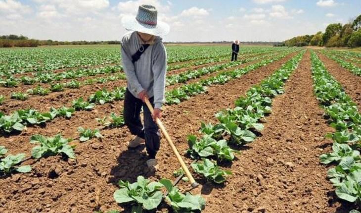 Reportan aumento de la producción agrícola en Venezuela en 2020