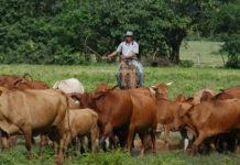 Presidente de Fedenaga informó cuánto gana un ganadero al mes