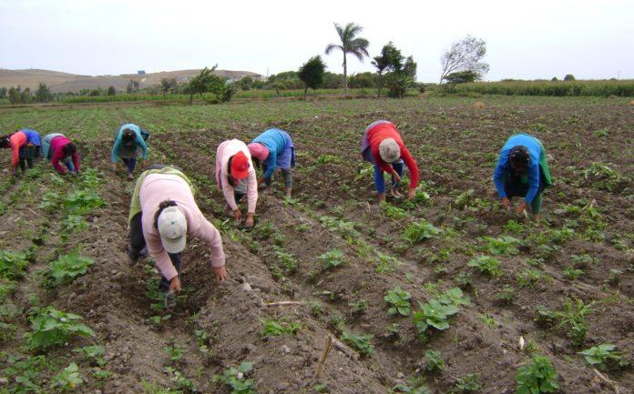 Aseguran que la falta de gasoil, robos y desinversión tiene en crisis a trabajadores agropecuarios
