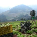 Por falta de gasoil, en los últimos dos meses se perdieron 80 mil toneladas de alimentos en Venezuela