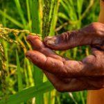 Sociedad Venezolana de Ingenieros Agrónomos cumple 77 años y debate sobre la seguridad alimentaria