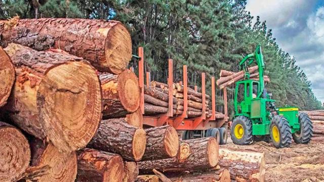 Industria forestal en caída: Plantación de pino en Venezuela pasó de 40 mil hectáreas a 2 mil