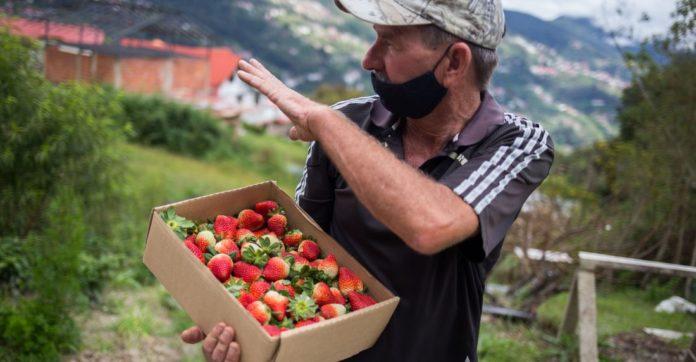 ¿Qué factores afectan la producción agrícola venezolana?