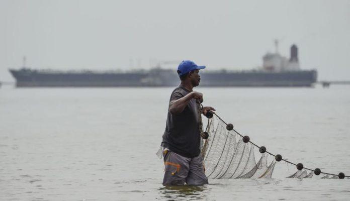 El camarón es el principal producto de exportación venezolano: ¿a dónde lo exportan?